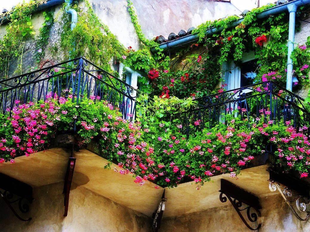 برای محدود کردن دید همسایه در تراس گیاه بکارید