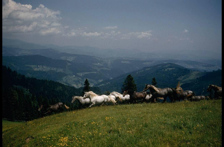 دویدن اسب های آزاد در طبیعت + عکس