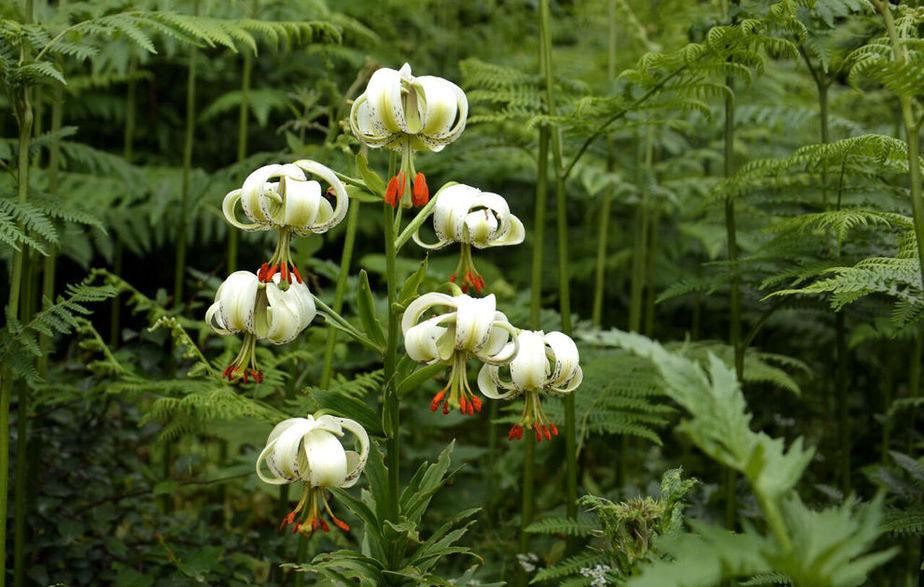 نادرترین و عجیب ترین گل جهان در داماش گیلان + عکس