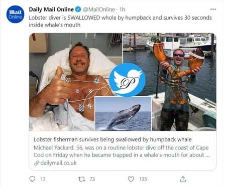 نهنگ غواص را بلعید و سپس بیرون انداخت+عکس
