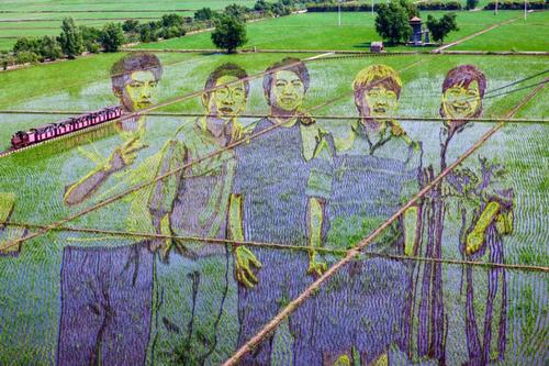 طرحی فوق العاده از چینی ها در شالیزار + عکس