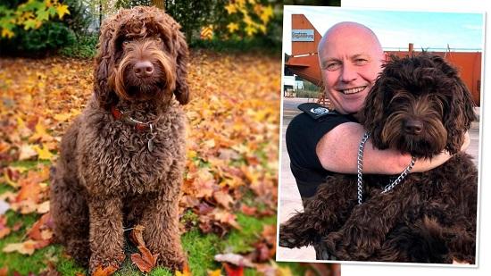 این سگ «فوقالعاده»، فرشته نجات یک زن شد