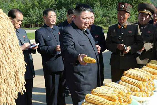 قحطی مرگبار در کره شمالی؛ چرا غذای کافی ندارند؟
