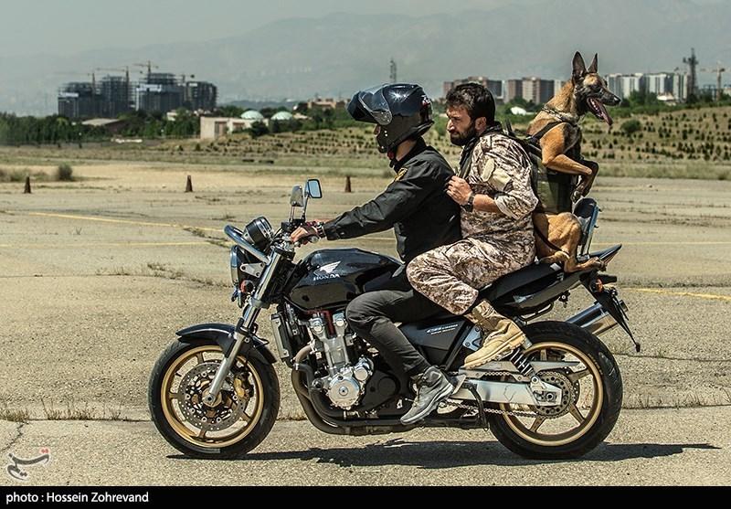 موتور سواری سگ آموزش دیده + عکس