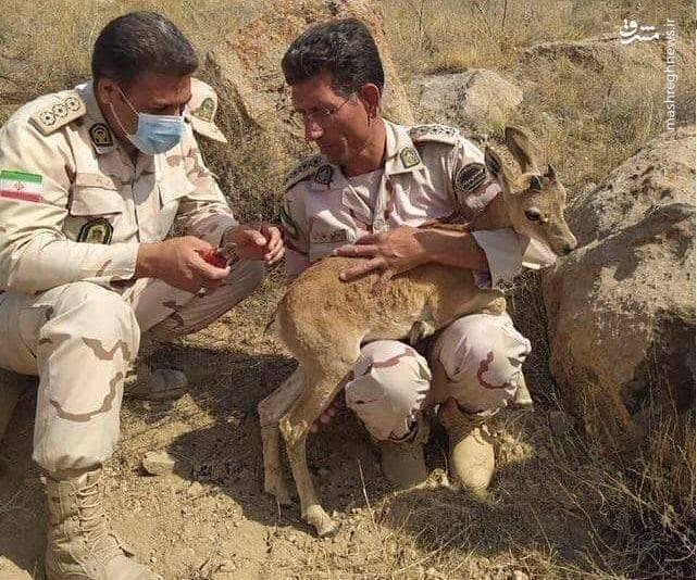 نجات بزغاله وحشی توسط مرزبانان + عکس