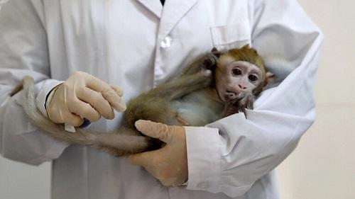 مرگ اولین چینی در اثر ابتلا به آبله میمونی