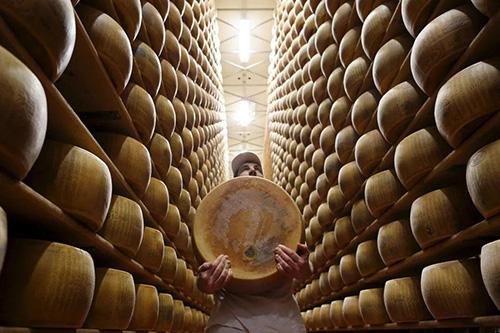 پنیرهای گرانقیمت به جای وثیقه وام بانکی