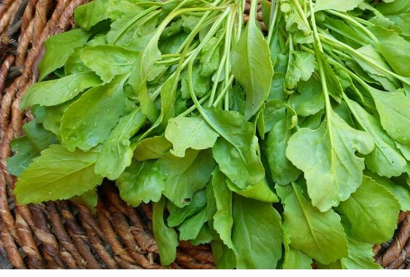 این سبزی مفید را بشناسید