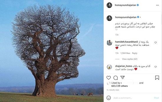 درختی که شبیه همایون شجریان است