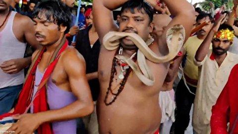رقص عجیب با مارها در هند!