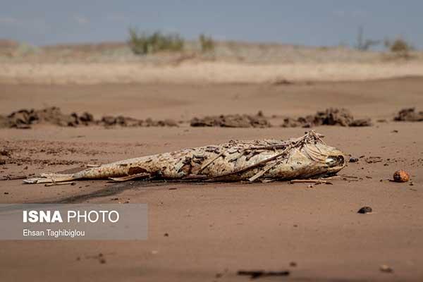 مرگ ماهیها در رودخانه قزل اوزن
