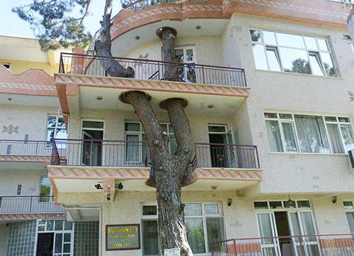 درختانی که از داخل ساختمان عبور کردند