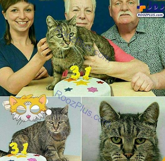 پیرترین گربه جهان ۳۱ ساله شد+عکس