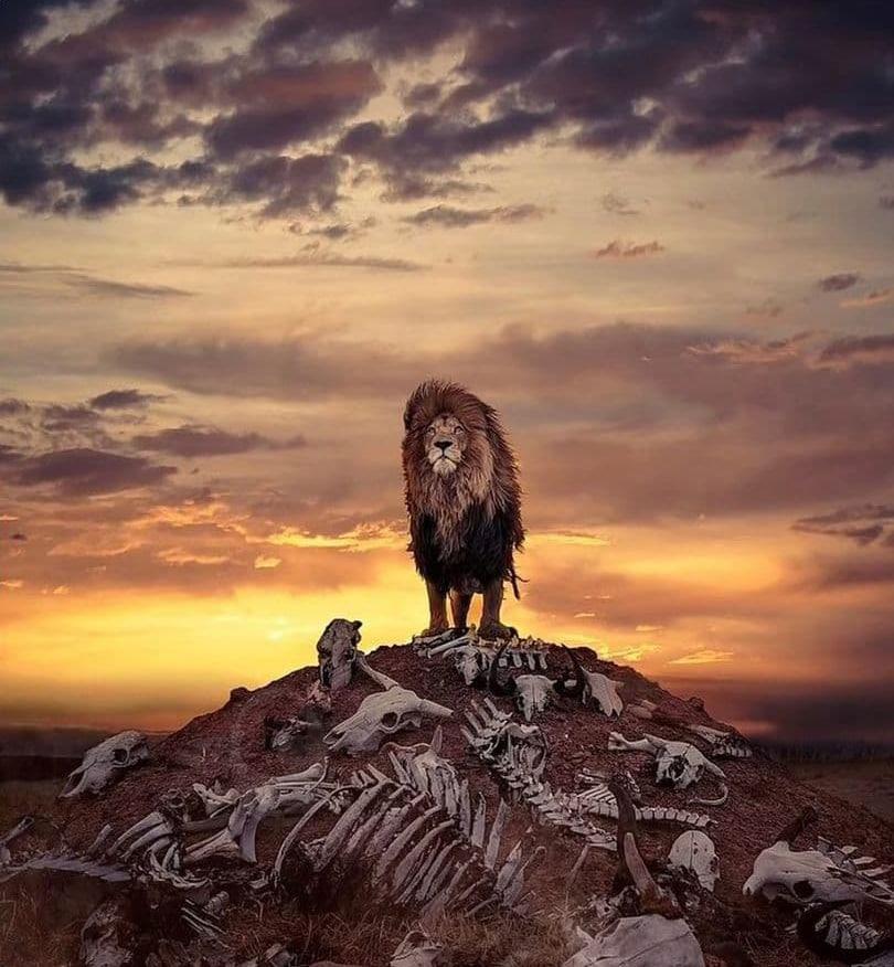 صحنهای عجیب از پادشاه جنگل در آفریقای جنوبی