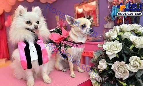 جشن ازدواج لاکچری برای دو سگ+ عکس