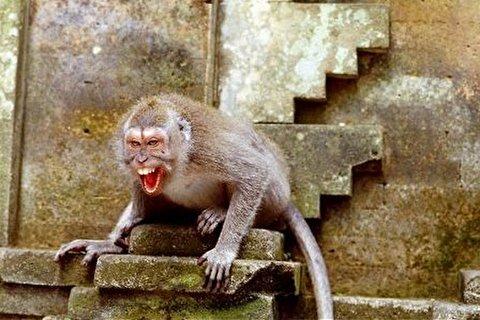 بزن بزن میمونهای وحشی وسط شهر
