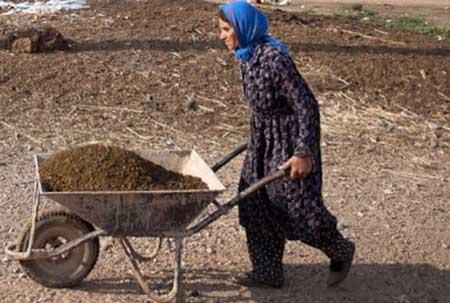 آمار عجیب از واردات لاستیک فرغون به ایران