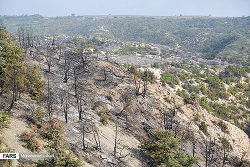 آتش به جان جنگلهای بکر جهاننما افتاد