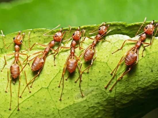 ساخت گوشی هوشمند با الهام از دندان مورچه!