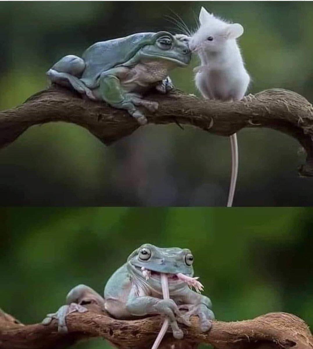عاقبت دردناک کنجکاوی موش + عکس
