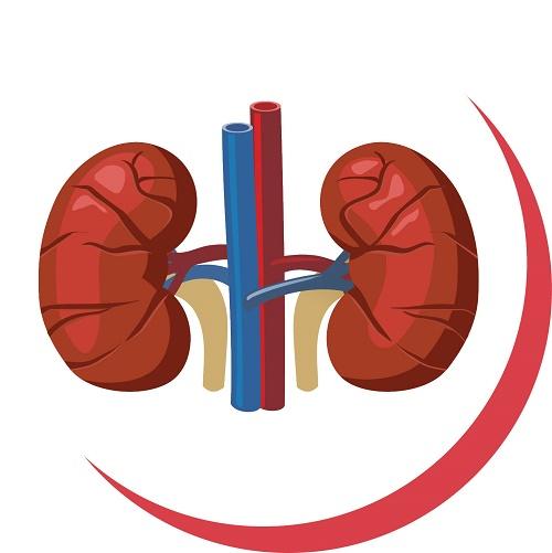 اندام مورد علاقه ویروس کووید-۱۹