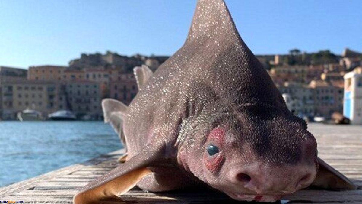 صید یک ماهی عجیب و غریب تعجب همه را برانگیخت+عکس