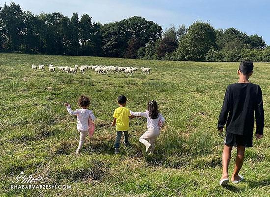 گوسفندها، کریستیانو رونالدو را فراری دادند