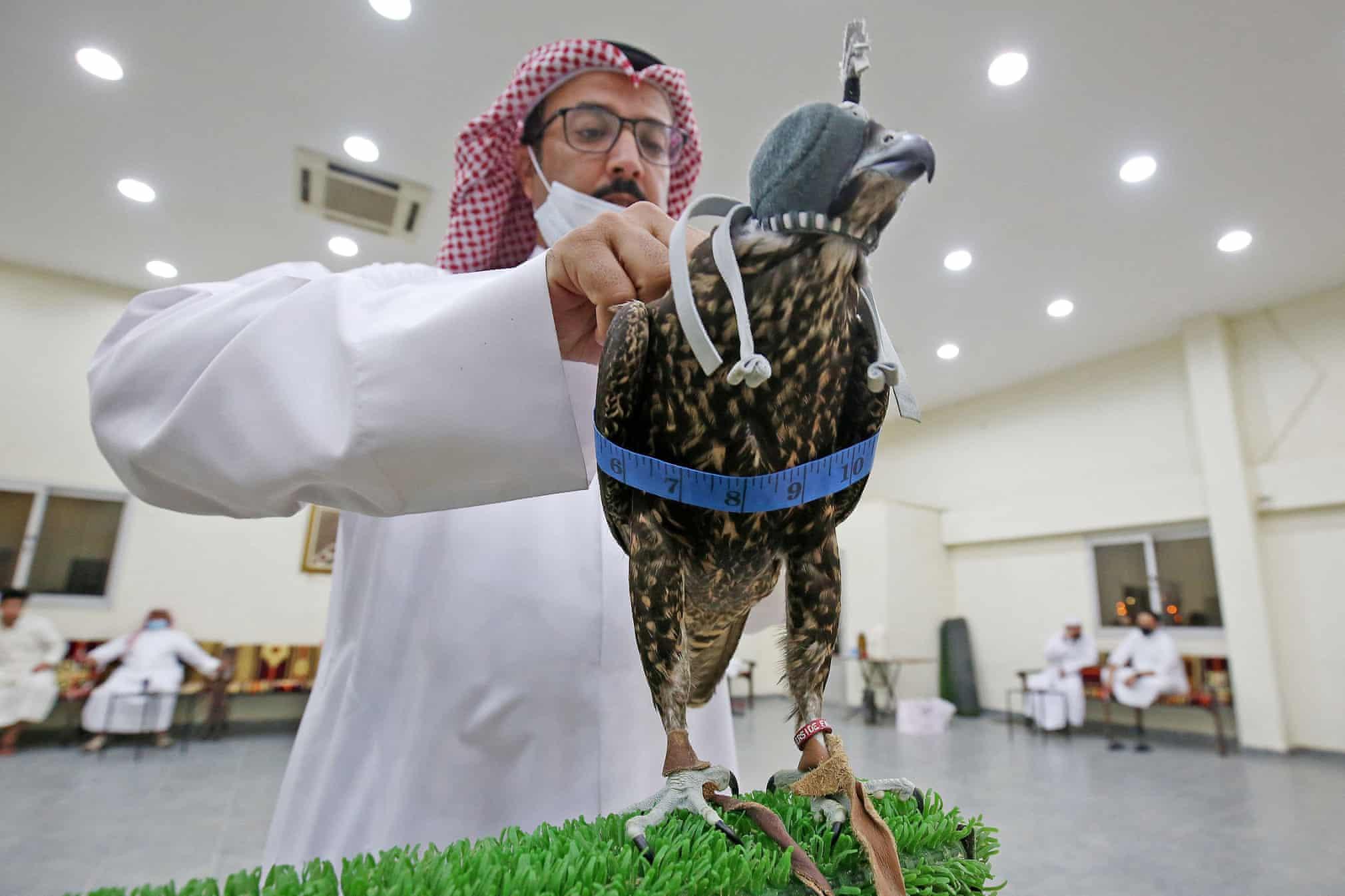 مشتری خرید شاهین در حراجی کویت + عکس