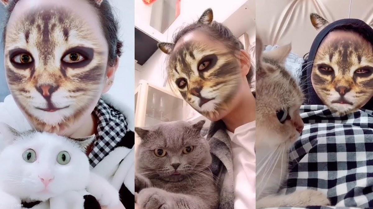 واکنش گربهها در مقابل فیس فیلتر اینستاگرام