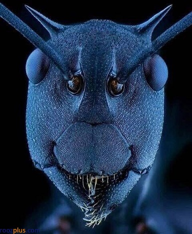 چهره واقعی و عجیب یک مورچه زیر میکروسکوپ+عکس