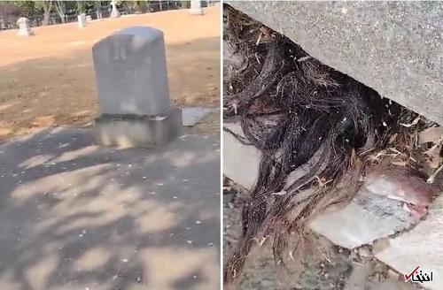 تصویر ترسناک از موهای بیرونزده از یک قبر