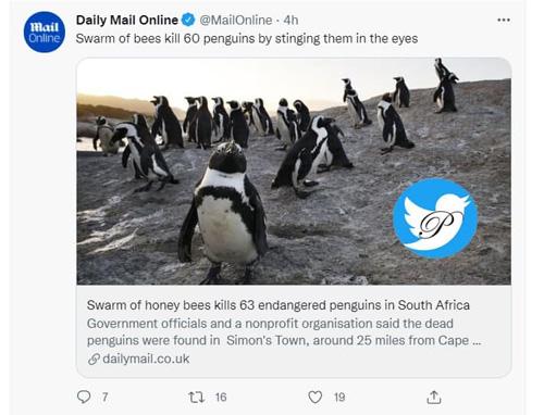 لشگر زنبورها در آفریقا ۶۳ پنگوئن را کشتند
