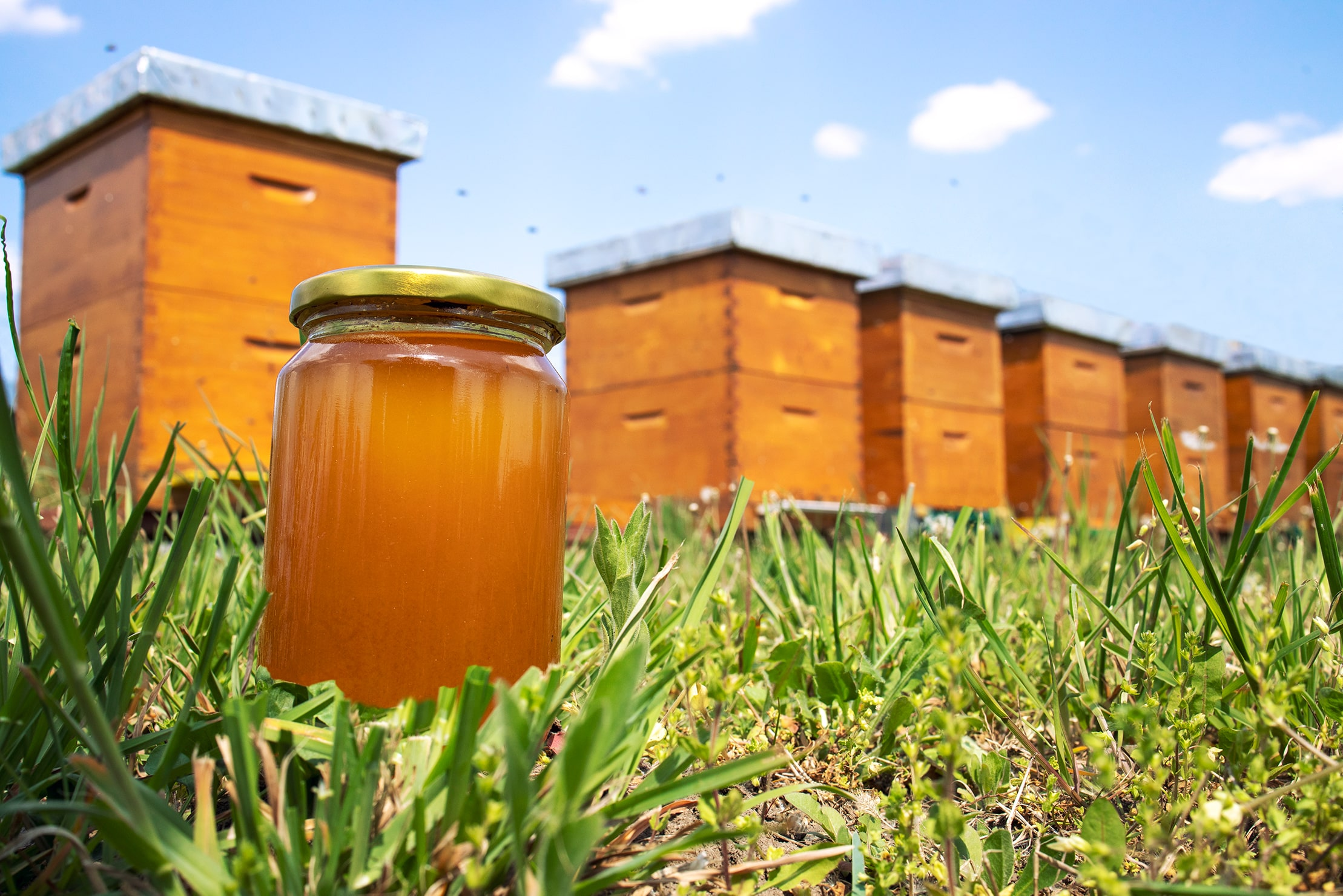 اسید عمده عسل چیست؟