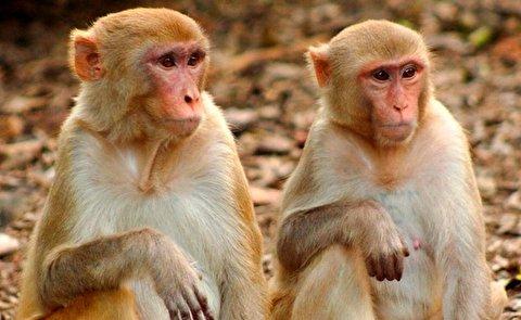 نجات معجزهآسای میمون از مرگ توسط همنوع بسیار باهوشش
