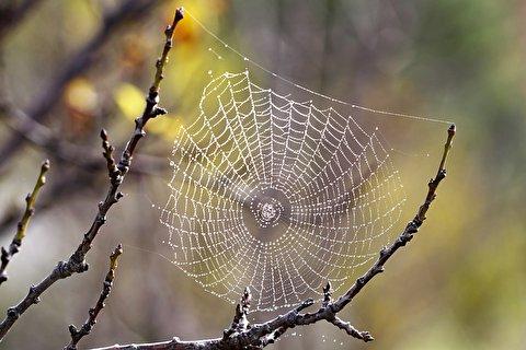 تایملپس دیدنی از بافت تار عنکبوت