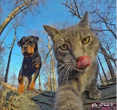 گربه معروف سلفی بگیر