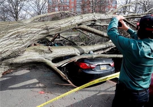 شکستن درختان در پایتخت آمریکا درپی طوفان + تصاویر