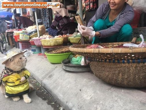 گربه ماهی فروش