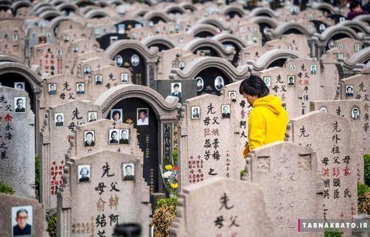 چین: زنی در میان قبرها گل می گذارد, روز معروف به جارو زدن قبرها, شانگهای