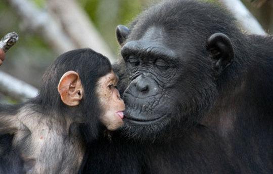 مادرانه های حیات وحش