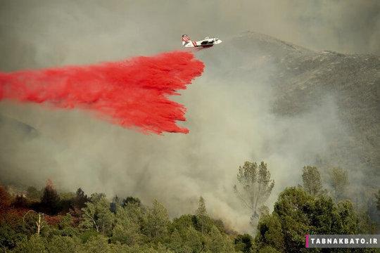 ایالات متحده ی آمریکا: هواپیمایی که محموله ای از مواد خاموش کننده آتش را در جنگل های شمال کالیفرنیا می پاشد