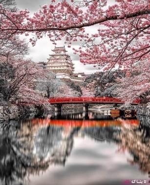 هیمه جی ژاپن یکی از زیباترین قلعه های جهان