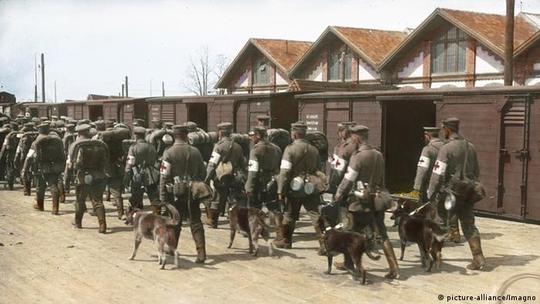 خصوصیات بینظیر سگ ژرمن شپرد باعث شد تا توجه نظامیان را به خود جلب کند و از آن در عرصه نگبهانی، پیامرسانی در خطوط مقدم، اعلام خطر در قبال بمبهای شیمیایی و امدادرسانی استفاده شود.