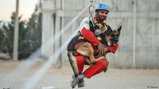 سگ ژرمن شپرد در سراسر دنیا (عکس امدادگران ایرانی) به امدادگران نیز کمک میرسانند. کاربرد سریع این سگها به عنوان سگهای