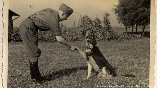در دوران جنگ جهانی دوم بیش از ۳۰ هزار سگ ژرمن شپرد در خدمت ماشین جنگی هیتلر قرار گرفت و وظیفه نگهبانی از اردوگاههای کار اجباری و اردوگاههای مرگ به آنها سپرده شد. این سگها در مناطق تحت اشغال و جبهههای جنگ نیز به کار گرفته شدند.