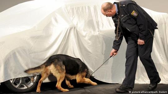 قرار بود ژرمن شپرد سگ چوپان باشد، اما این سگ باهوش و مشتاق آموختن حالا در عرصههای مختلفی چون جستجوی مواد منفجره، کشف مواد مخدر، نگهبانی، جستجو و تعقیب سارقان و موارد بسیاری دیگر بکار گرفته میشود.