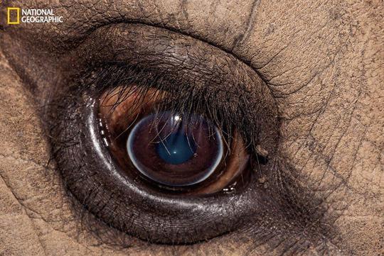 نمای نزدیک از چشم کرگدن سفید