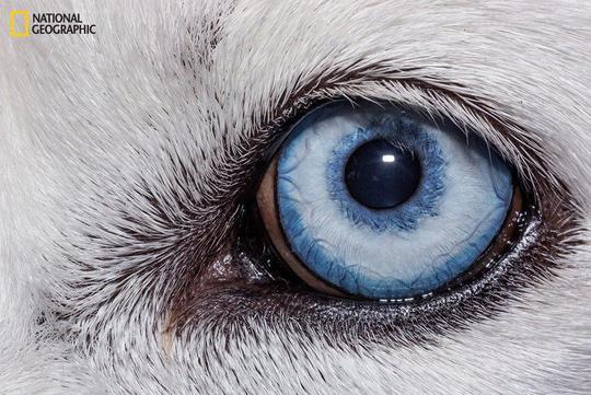 نمای نزدیک از چشم شترمرغ