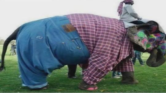 فیل، حیوان مقدس هندوان درشکلی جدید
