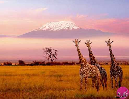 کوه های کلیمانجارو،تانزانیا